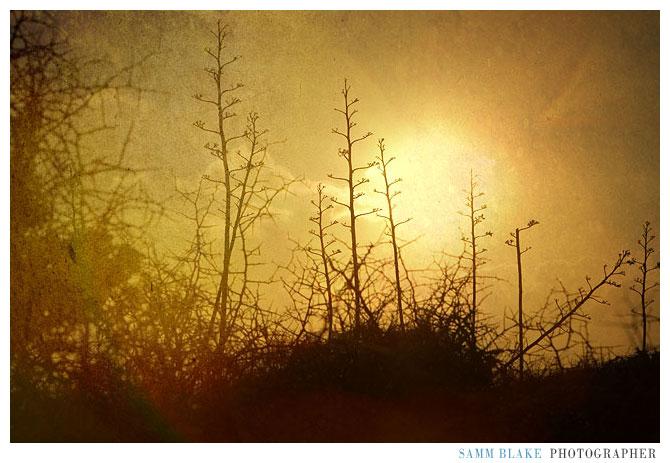 gero_trees1.jpg
